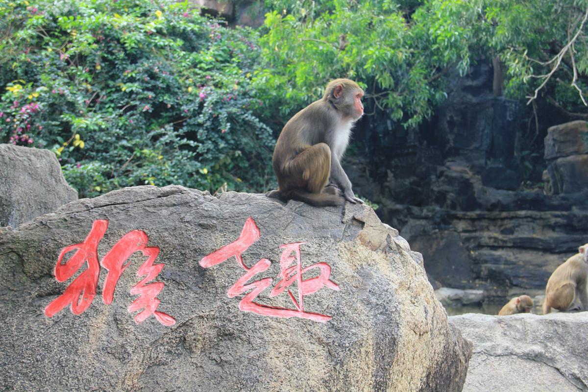 Monkey Island Lingshui Hainan3