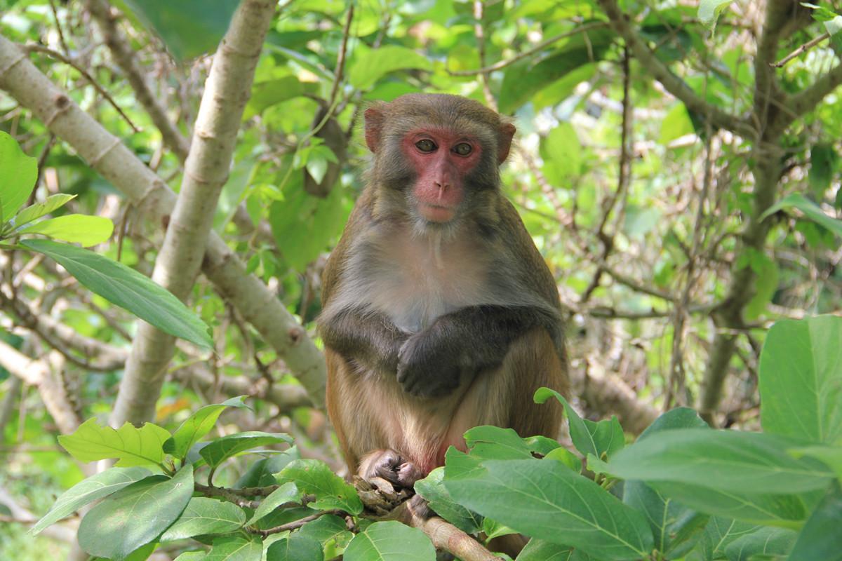Monkey Island Lingshui Hainan