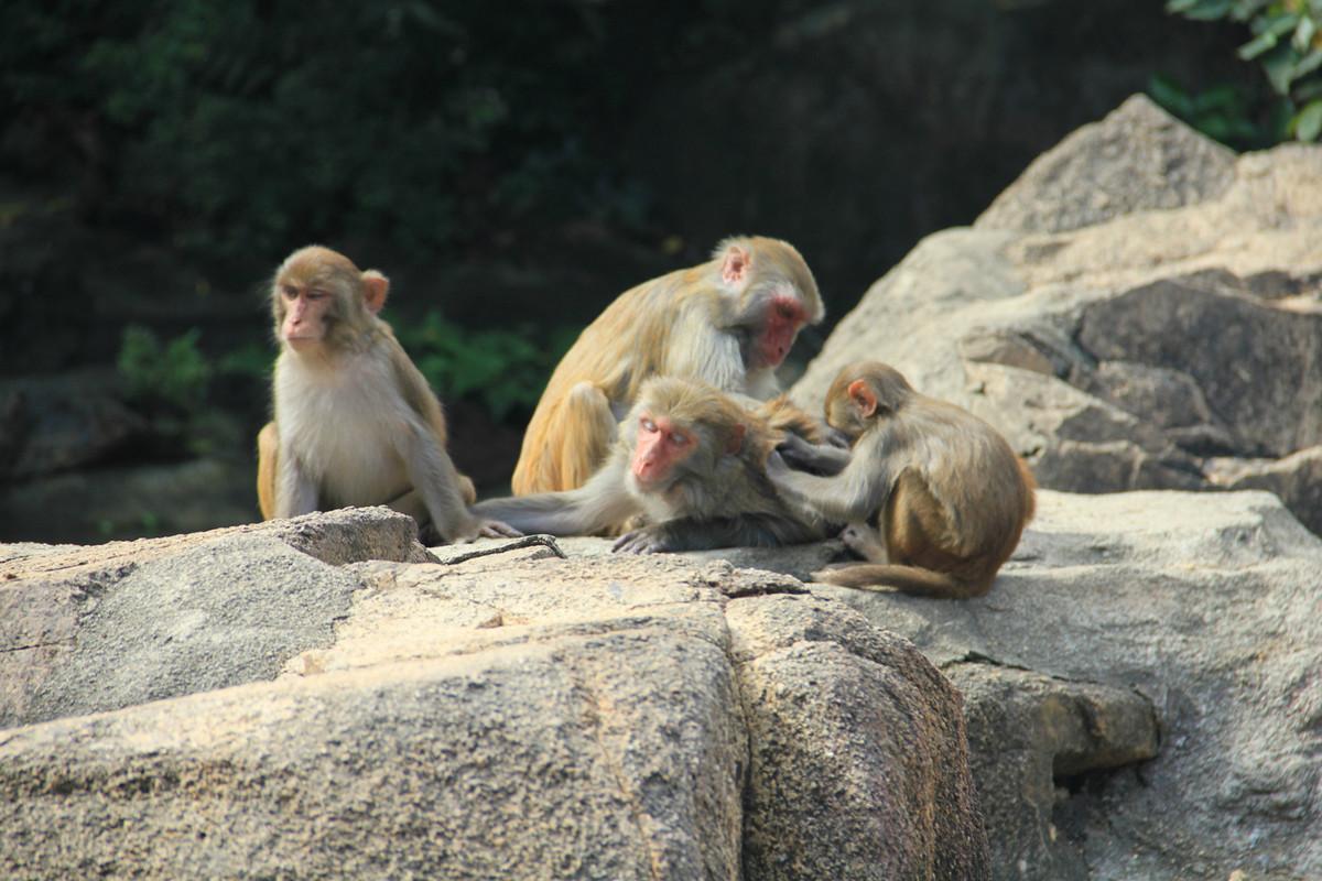 Monkey Island Lingshui Hainan9