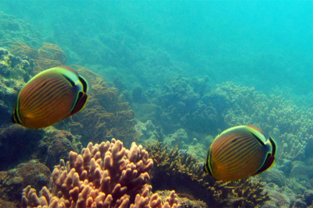 Sanya Scuba Diving Package: PADI Open Water Dive Two Tanks at Yalong Bay Sanya Hainan Island