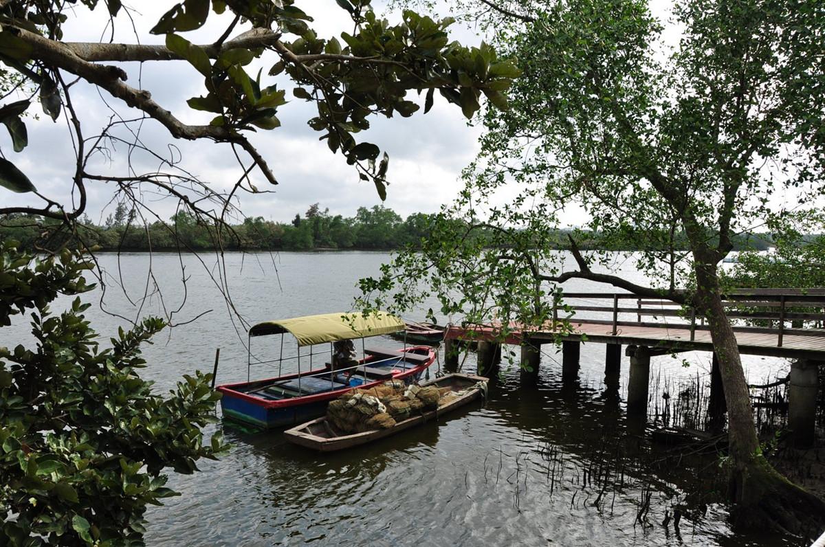 Wenchang Bamen Bay Mangrove Tree Forest Hainan Island3