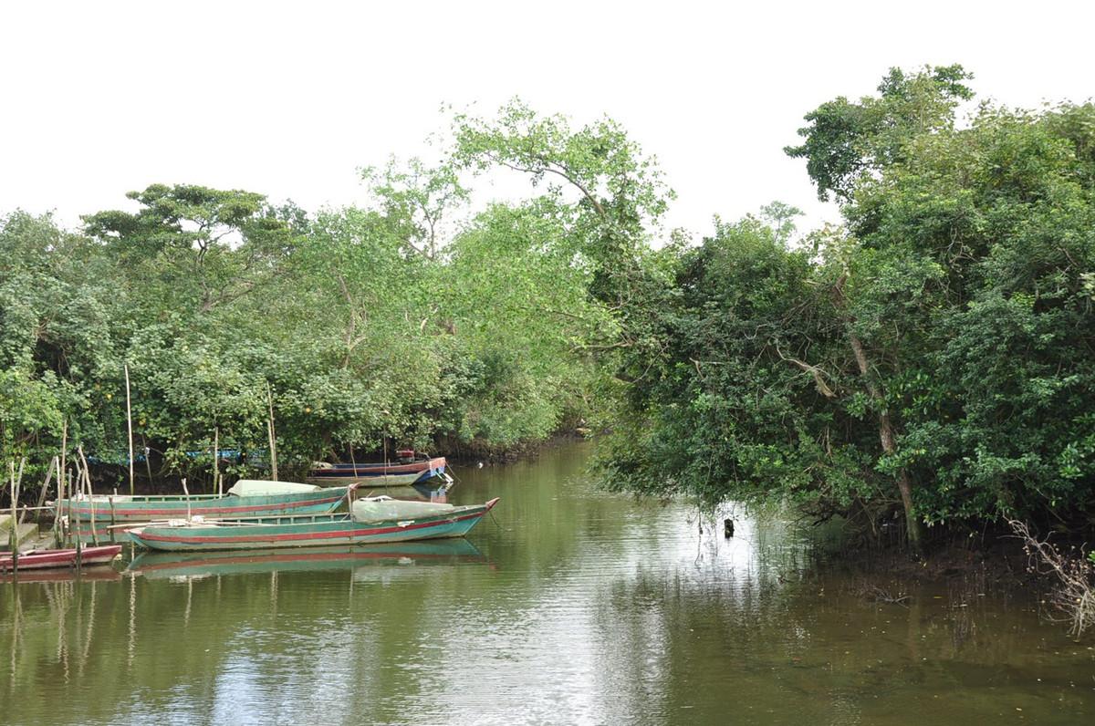 Wenchang Bamen Bay Mangrove Tree Forest Hainan Island7