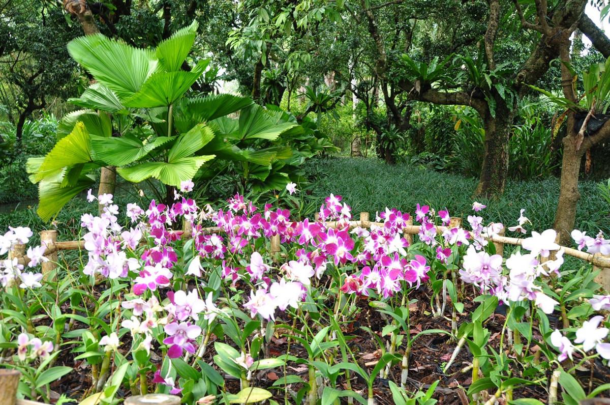 Xinglong Tropical Botanical Garden Hainan Island4
